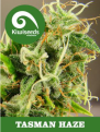 Amsterdam Seed Supply Reviews